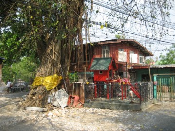 Bodhi tree and shrine in situ